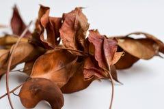 Bakgrund av isolerade Autumn Leaves - ställe för din design, text royaltyfri foto