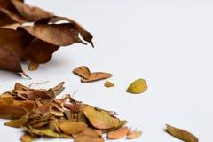 Bakgrund av isolerade Autumn Leaves - ställe för din design, text royaltyfria foton