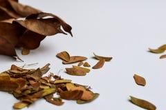 Bakgrund av isolerade Autumn Leaves - ställe för din design, text arkivfoton