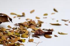 Bakgrund av isolerade Autumn Leaves - ställe för din design, text royaltyfri fotografi