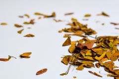 Bakgrund av isolerade Autumn Leaves - ställe för din design, text royaltyfri bild