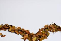 Bakgrund av isolerade Autumn Leaves - ställe för din design, text arkivbild