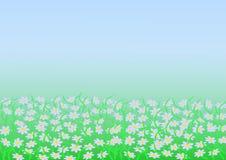 Bakgrund av kamomillen i dimman Arkivbild