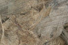 Bakgrund av kokosnötspathefiber Fotografering för Bildbyråer