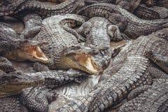 Bakgrund av krokodiler med öppna munnar arkivfoton