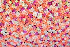 Bakgrund av kulöra rosor Arkivbilder