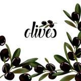 Bakgrund av kvistar av oliv Arkivfoton