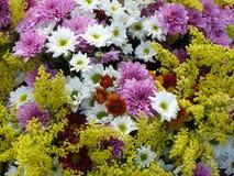 Bakgrund av ljust kulört blomma för blomma Arkivfoto