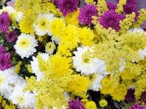 Bakgrund av ljust kulört blomma för blomma Royaltyfri Bild