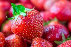 Bakgrund av mogna jordgubbar Royaltyfria Bilder