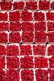 Bakgrund av mogna röda hallon Royaltyfria Bilder