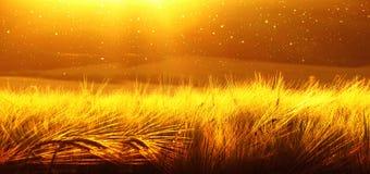 Bakgrund av mognande korn av vetefältet på solnedgånghimlen Ultrawide bakgrund Soluppgång Signalen av fotoet som överförs till Royaltyfri Foto
