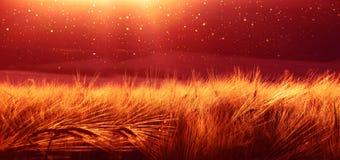 Bakgrund av mognande korn av vetefältet på solnedgånghimlen Ultrawide bakgrund Soluppgång Signalen av fotoet som överförs till Royaltyfri Bild
