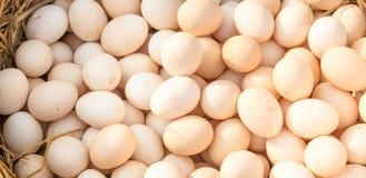 Bakgrund av nya ägg Royaltyfria Bilder