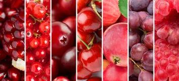 Bakgrund av nya frukter och bär royaltyfri bild