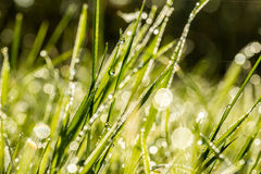 Bakgrund av nytt grönt gräs med daggdroppar Arkivfoton