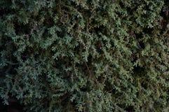 Bakgrund av ogräset på väggen Arkivfoto