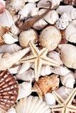 Bakgrund av olika havsskal Royaltyfria Bilder