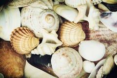 Bakgrund av olika havsskal Arkivfoton