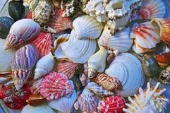 Bakgrund av olika havsskal Royaltyfri Fotografi