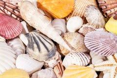 Bakgrund av olika snälla havsskal Arkivfoto