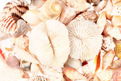 Bakgrund av olika typer av havsskal Arkivfoton