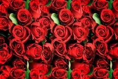 Bakgrund av röda rosor som är symboliska av förälskelse Arkivfoton