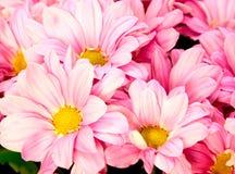 Bakgrund av rosa färg-vit blommor Arkivfoto