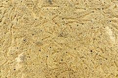 Bakgrund av sandkorn på stranden, gult golv av sandkorn på stranden arkivbild