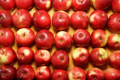 Bakgrund av små äpplen Royaltyfria Bilder