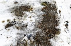 Bakgrund av snö på vägen, vintertextur med gummihjulspår royaltyfri bild