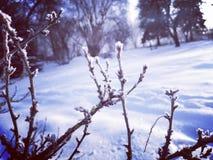 Bakgrund av snöig filialer fotografering för bildbyråer