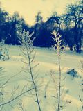 Bakgrund av snöig filialer royaltyfri bild