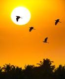 Bakgrund av solen och fåglar på solnedgången Arkivfoton