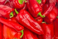 Bakgrund av spansk peppar och chili Arkivfoton