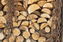 Bakgrund av staplat trä Klart vedträ Olika sorter av träjournaler som överst staplas av de Arkivbilder