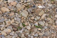 Bakgrund av stenen Royaltyfria Bilder