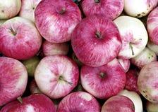 Bakgrund av stora röda mogna äpplen Royaltyfria Bilder