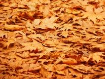 Bakgrund av stupade Autumn Leaves Arkivfoton