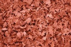 Bakgrund av stupade Autumn Leaves royaltyfria bilder