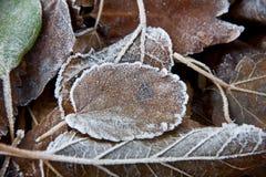 Bakgrund av stupade sidor som täckas med rimfrost royaltyfri foto