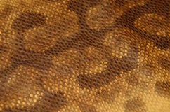 Bakgrund av textur för läder för ormhud Fotografering för Bildbyråer