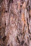 Bakgrund av textur för trädskäll Arkivfoton