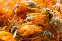 Bakgrund av torkade blommor av calendulaen arkivbilder