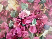 Bakgrund av torra blommor i olika färger royaltyfri foto