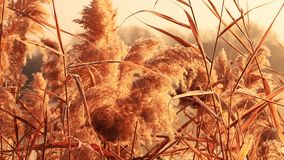 Bakgrund av torra vasser framkallar i vinden lager videofilmer