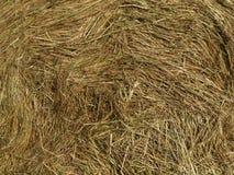 Bakgrund av torrt gräs Fotografering för Bildbyråer