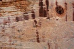 Bakgrund av trä Royaltyfria Bilder