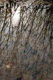 Bakgrund av träd som avspeglas på vattenyttersida Arkivfoton