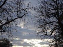 Bakgrund av trädfilialer och himlen under höst i Paris Arkivbilder